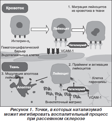 Натализумаб Инструкция По Применению - фото 7