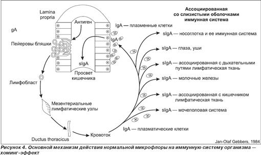 Стимуляция собственной микрофлоры