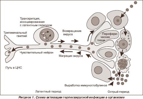 лечения HVS -инфекции у