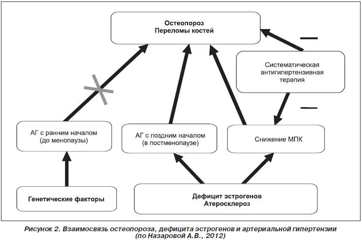 Народные средства от гипертонии калина - Лечение