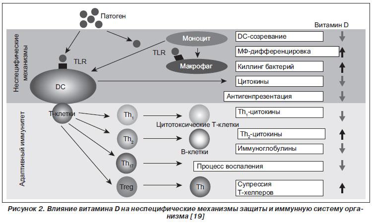 Механизмы витамин-D-зависимой