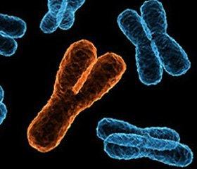 21-я пара хромосом может быть удалена