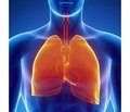 Drug management of oxidation-reduction state of the body in respiratory tract diseases (part 6)