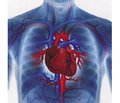 Сучасний підхід до діагностики серцево-судинних розладів у новонароджених із груп перинатального ризику в неонатальний період