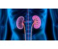 Chronic kidney disease in children  (literature review)