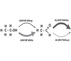 Генетические факторы  и биохимические маркеры алкоголизма