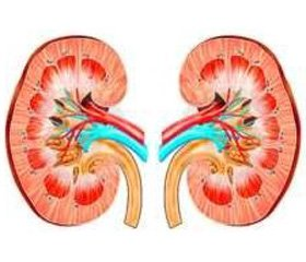 Autonomic status in children with chronic pyelonephritis  at the initial stages of chronic kidney disease