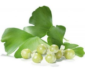 Ginkgo Biloba Preparations: Toward Discoveries inthe Clinical Neuropharmacology