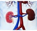Клінічні практичні керівництва зведення пацієнтів похилого віку зхронічною хворобою нирок стадії 3б або вище (рШКФ < 45 мл/хв/1,73 м2) Найкраща європейська ниркова практика