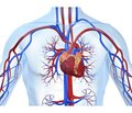 Myocardial stunning in urgent and critical conditions associated with systemic hypoxia
