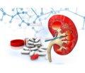 Современные подходы к лечению хронической болезни почек: в фокусе ренопротекция