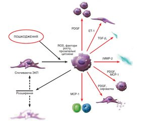 A take on liver fibrosis in the light of understanding the modern mechanisms of its development