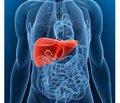 Дослідження жовчних кислот —  основа нової концепції терапії.  УДХК та нор-УДХК: дві жовчні кислоти  для майбутнього, і не тільки в гепатології