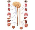 Клинические проявления и коррекция  вегетативной дисфункции у детей и подростков
