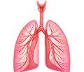 Cтруктурно-функціональний стан артерій великогокола кровообігу у пацієнтів із легеневою артеріальною гіпертензією
