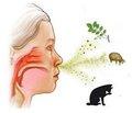 Мировой опыт использования  спорообразующих бацилл для лечения  и профилактики пищевой аллергии у детей