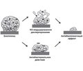 Pharmaceutical effect on the biofilm dispersion. Nitric oxide donors