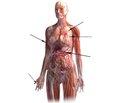Кардиовиол® — оптимальный выбор в лечении синдрома вегетативной дисфункции. Лечит болезни врач, но излечивает природа. Гиппократ