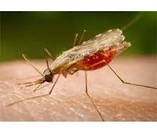 Эпидемиологические аспекты малярии у детей в Астраханском регионе