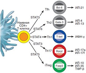 The role of IL-17 in the pathogenesis of type 1 and type 2 diabetes mellitus in humans