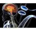 Cell therapy in Parkinson's disease: opportunities and challenges