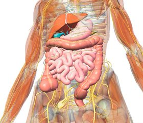 Age characteristics of the motor disorders in inflammatory pathologies of digestive system