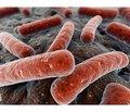 Бактеріальний вагіноз: сучасні підходи до лікування