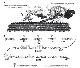 Polysaccharide-degrading enzymes as agents dispersing bacterial biofilms
