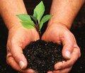 Компания ООО «КРКА Украина» посадила деревья гинкго билоба в парках Украины