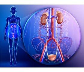 Преимущества препарата ЭСПА-ФОЦИН® в лечении и профилактике инфекций нижних мочевыводящих путей