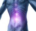 Фундаментальные и прикладные исследования в области остеопороза