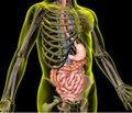 Специфичность клинической симптоматики синдрома   раздраженного кишечника и ее дифференциально-диагностические признаки