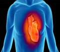 Роль внутриутробного антигенного влияния в морфогенезе сердечно-сосудистой системы