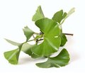 The Use of Ginkgo Biloba Extract in the System of Rehabilitation of Stroke Patients