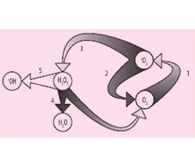 Место Тивортина® (L-аргинина) в комплексной терапии дисциркуляторной энцефалопатии