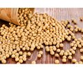 Soy phytoestrogens: hormonal activity and impact on the reproductive system