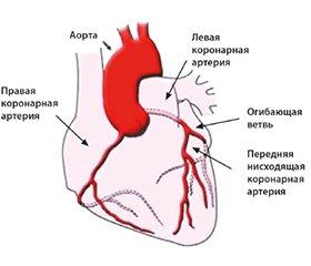 Основы диагностики инфаркта миокарда на уровне экстренной медицины