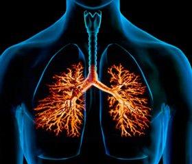 Эхинацея композитум С — биорегуляционный подход при заболеваниях дыхательных путей