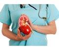 Рекомендації для всіх: що дозволяє зберегти нирки здоровими