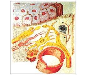 Лимфомиозот — биорегуляционный подход при различных заболеваниях в практике семейного врача