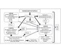 Влияние комплексного лечения гипотиреоза на ренальную функцию у больных гипотиреозом