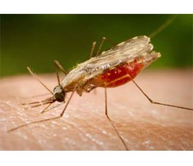 The Current Situation on Malaria in Astrakhan Region