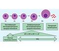 Лечение и профилактика гематологических осложнений при проведении химиотерапии: в фокусе — тромбоцитопения