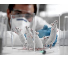 Influence of ademol on the level of tumor necrosis factor α in the brain of rats with model of traumatic brain injury