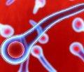 Столбняк: обзор современных рекомендаций поэпидемиологии, этиологии, патогенезу, клинике, интенсивной терапии в период войн и в мирное время