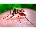ВОЗ признала вспышку лихорадки Зика чрезвычайной ситуацией международного масштаба