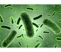 Sporogenous Probiotics, Iron Deficiency and Immunity