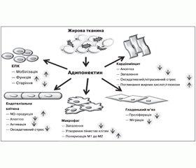 Адипонектин та цукровий діабет 2-го типу (патогенетичні аспекти як підґрунтя для оптимізації антидіабетичної фармакотерапії)