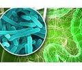 Питание неонатальной микробиоты