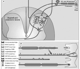 Pathogenesis and the modern comprehensive approach to the treatment of pain syndromes in neurology